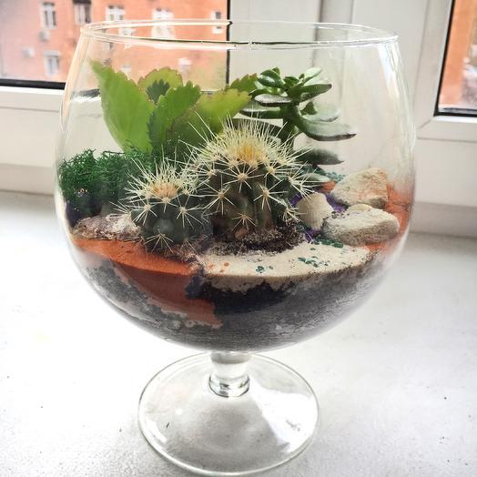 Флорариум «морские дюны»: букеты цветов на заказ Flowwow
