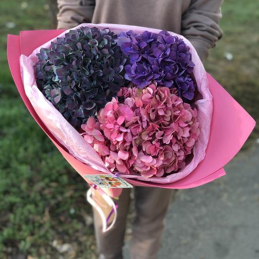 Гортензии: букеты цветов на заказ Flowwow
