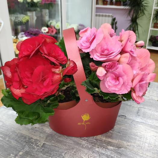 Бегонии в корзинке: букеты цветов на заказ Flowwow