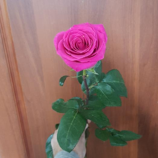 Розовая роза Пинк флоид