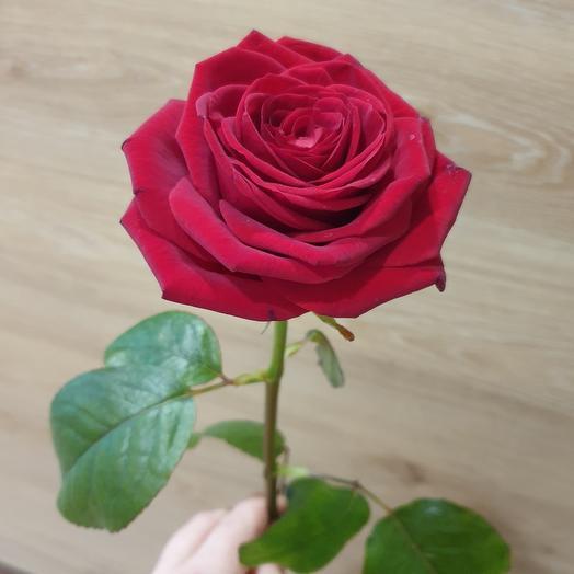 Роза красная 60 см