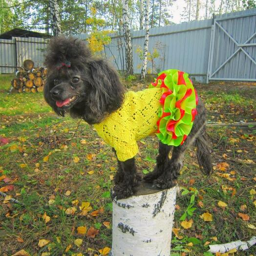 Платье вязаное для собаки