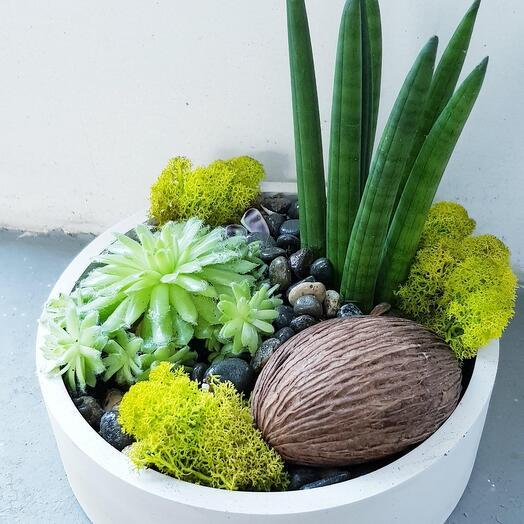 Композиция из комнатных растений