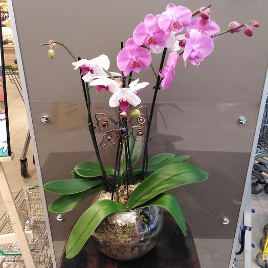 Орхидеи сестрички: букеты цветов на заказ Flowwow
