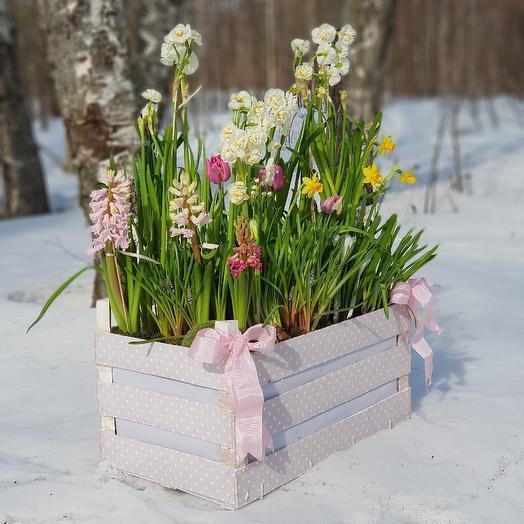 Альпийская весна: букеты цветов на заказ Flowwow