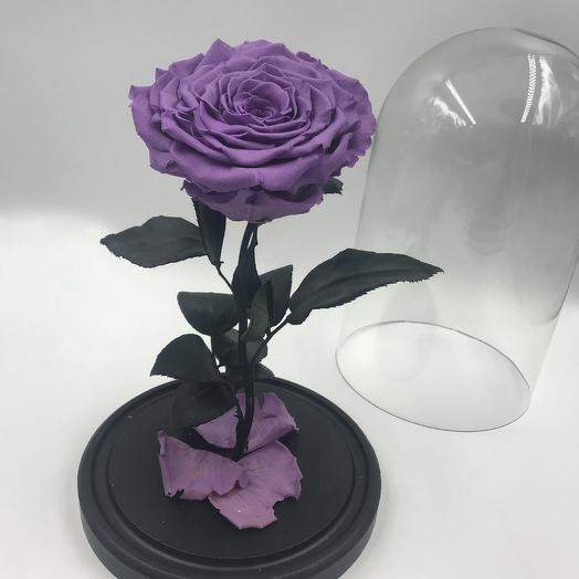 Темно-сиреневая роза в колбе KING: букеты цветов на заказ Flowwow