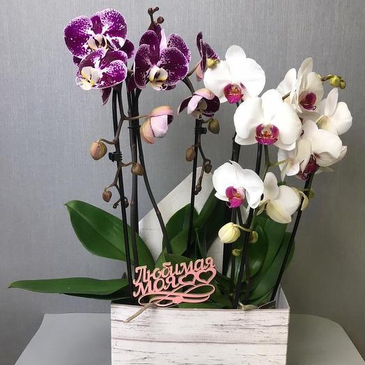 Цветущий сюрприз: букеты цветов на заказ Flowwow