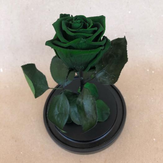 Роза в колбе Standart зелёная
