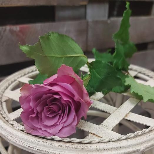 Сиреневые розы 45 см поштучно
