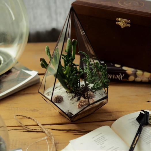 Морской флорариум: букеты цветов на заказ Flowwow