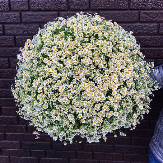 «Запах природы»: букеты цветов на заказ Flowwow