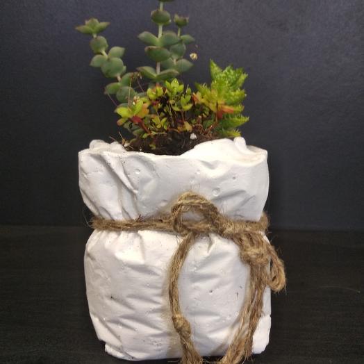 Суккуленты: букеты цветов на заказ Flowwow