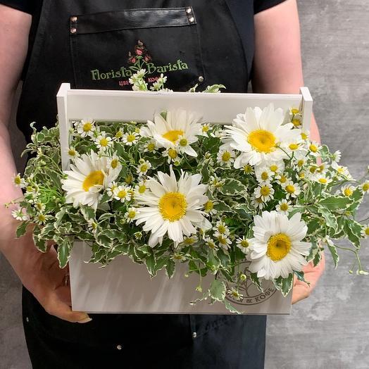 Летний ящичек с ромашками: букеты цветов на заказ Flowwow