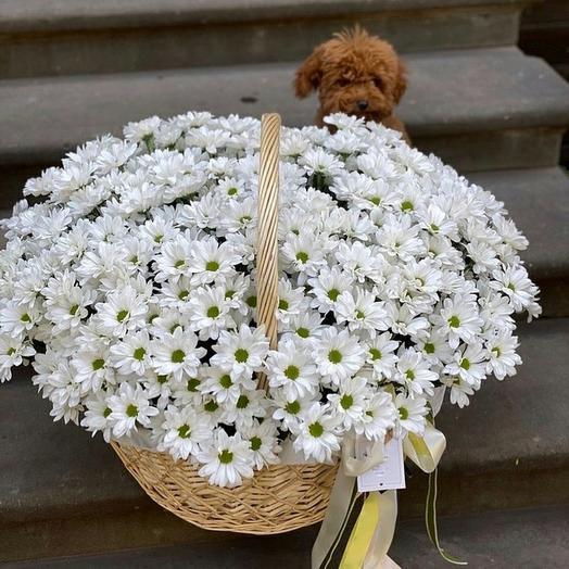 Корзина с хризантемами