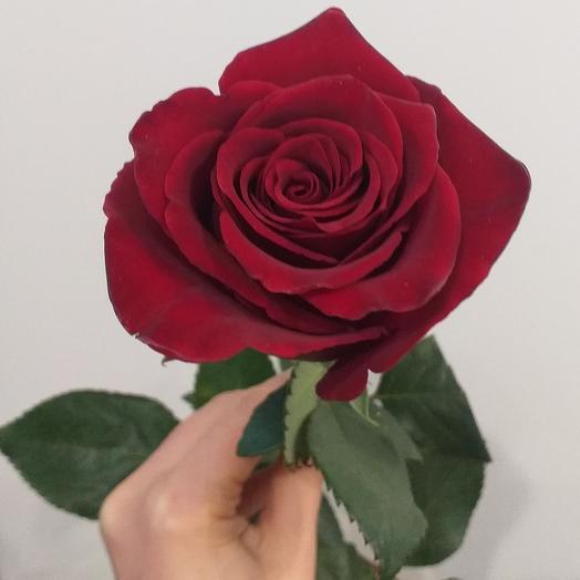 Роза Эксплорер 80см