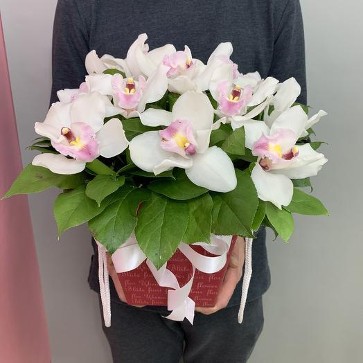 Королевская орхидея для королевы: букеты цветов на заказ Flowwow