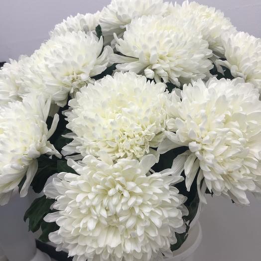 Белоснежная хризантема