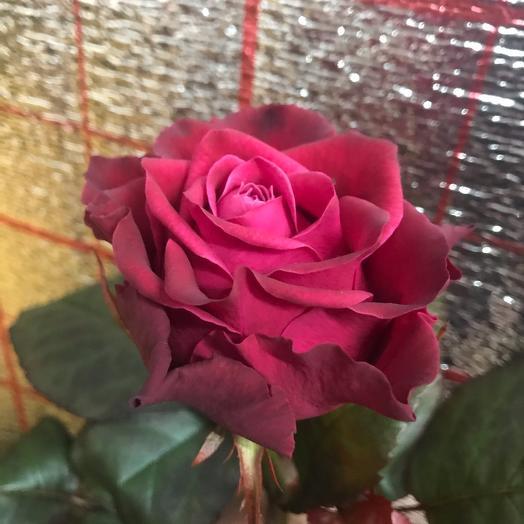 Роза 70 см