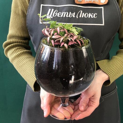 Мини-сад в вазе