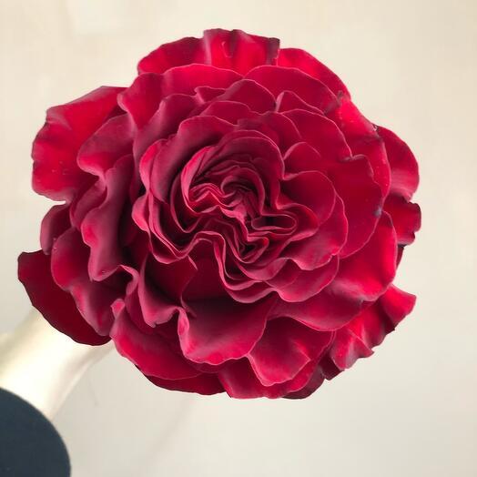 Роза Хартс (70см)