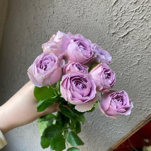 Пионовидная кустовая Роза лавандовая