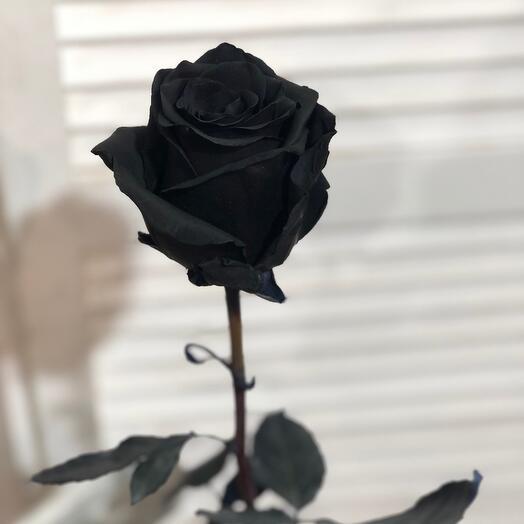 Чёрная Роза 70-80 см
