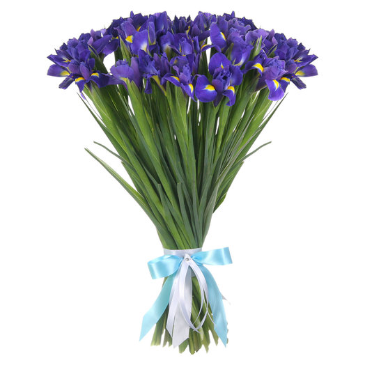 Букет из 51 ириса: букеты цветов на заказ Flowwow