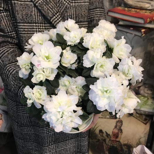 Белоснежная азалия: букеты цветов на заказ Flowwow