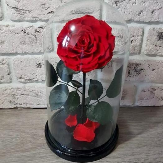 Роза в колбе king