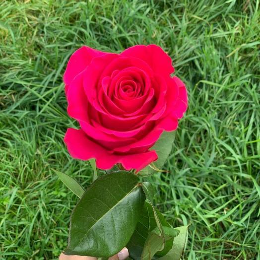 Розы Pink Floyd