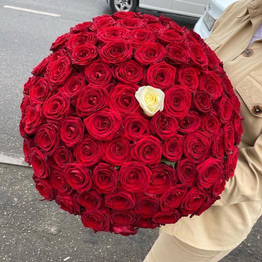 Роза 101 « Только ты»