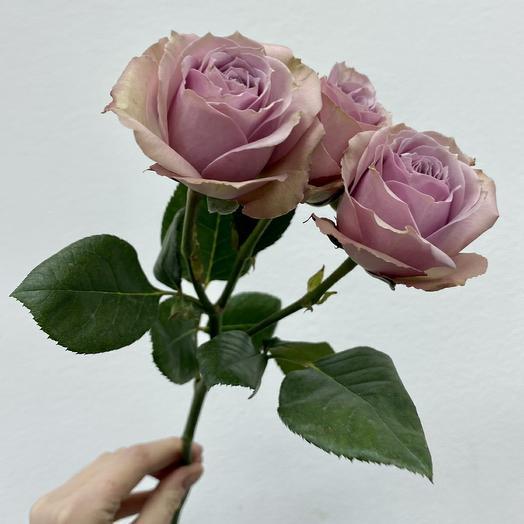 Лавандовая кустовая роза