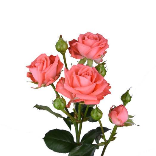 Роза кустовая Барбадос 50 см