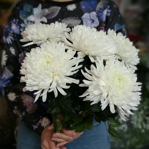 Одиночная хризантема