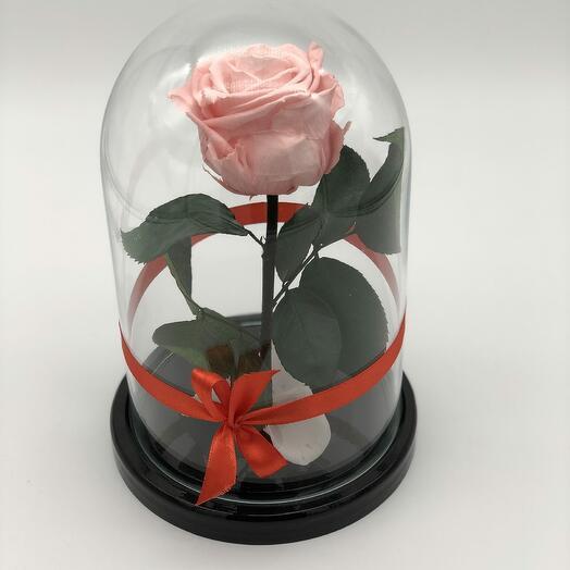 Роза в Стеклянно Колбе Розовая Мини