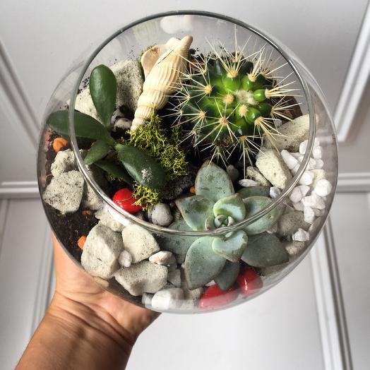Сад в аквариуме: букеты цветов на заказ Flowwow