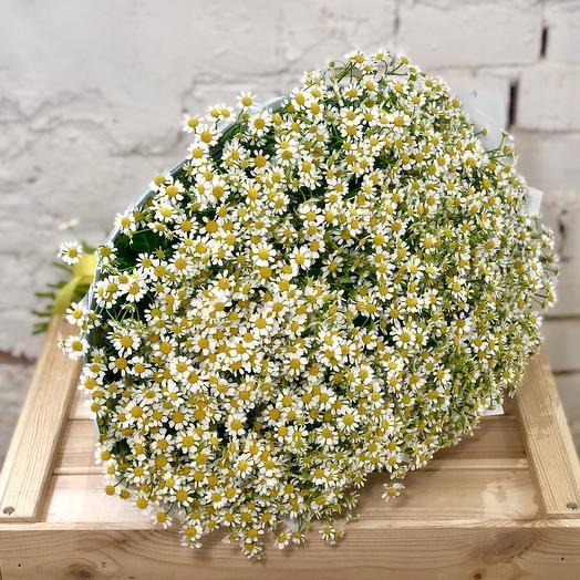 Букет из 51 веточки Ромашек Камилла: букеты цветов на заказ Flowwow