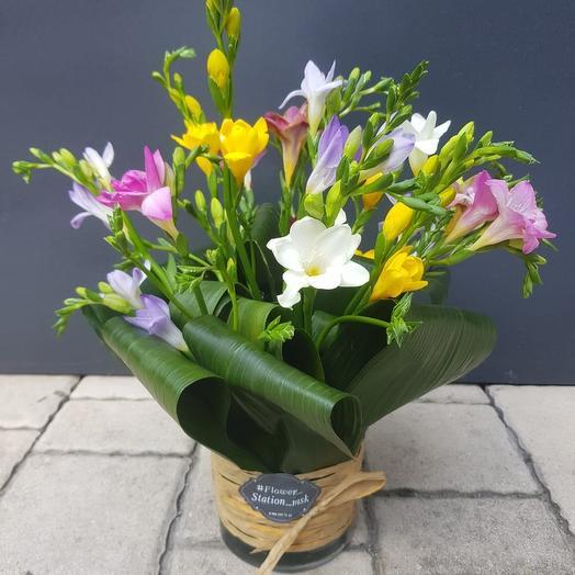Сказочные фрезии: букеты цветов на заказ Flowwow