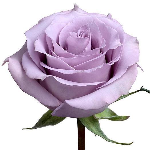 Роза ocean song