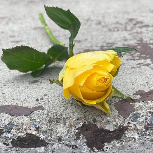 Роза Кения 30-35см желтая