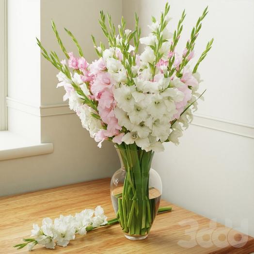 Гладиолусы белые: букеты цветов на заказ Flowwow
