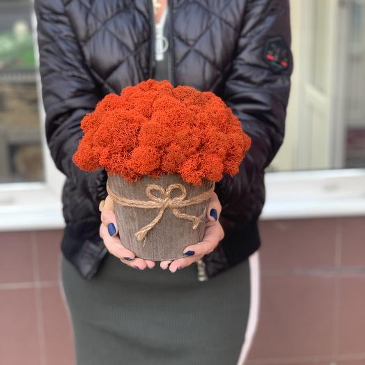 Кашпо с стабилизированным мхом: букеты цветов на заказ Flowwow