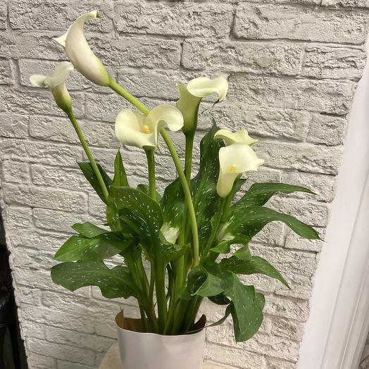 Калла-символ семейного счастьЯ: букеты цветов на заказ Flowwow