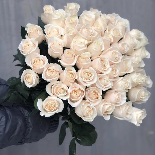 51 роза Alba