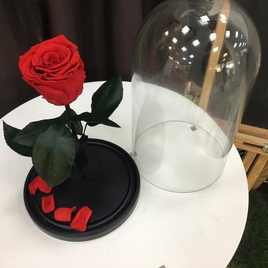 Стабилизированная Роза