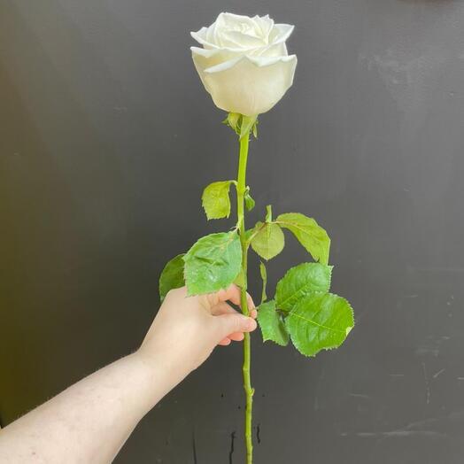 Роза Playa Blanka Эквадор 70 см