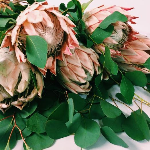Букет из протей с эвкалиптом: букеты цветов на заказ Flowwow