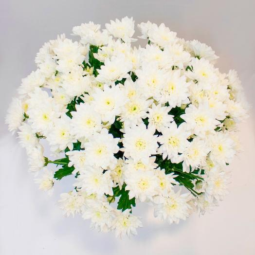 Кустовые хризантемы: букеты цветов на заказ Flowwow