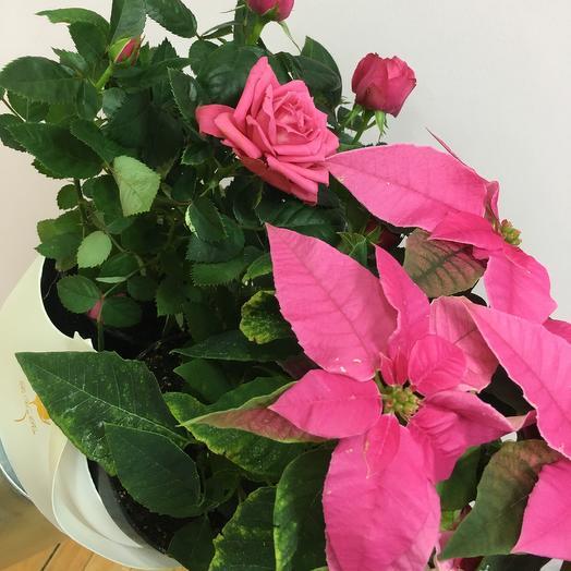 Корзина с розой и эуфорбией: букеты цветов на заказ Flowwow