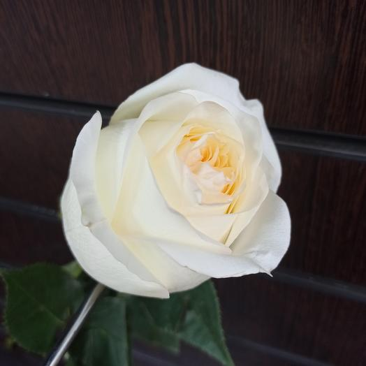 """Роза """"конделайт"""" 50 см"""